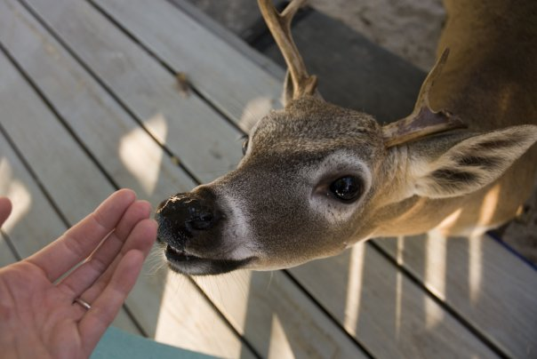 My bestie deer. This guy loved me!